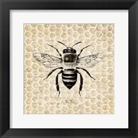 Framed Honeycomb No 40