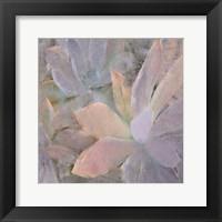 Framed Succulents 2
