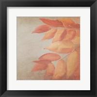 Framed Fall Colors 2
