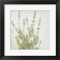 Framed Lavender 1