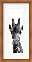 Framed Thoughtful Giraffe