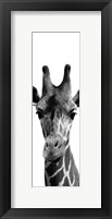 Framed Thoughtful Giraffe