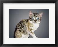Framed Boundless Cuteness 2
