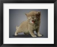 Framed Boundless Cuteness 3