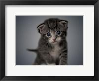 Framed Boundless Cuteness 4