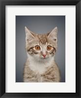 Framed Boundless Cuteness 5