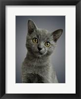 Framed Boundless Cuteness 6