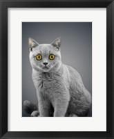 Framed Boundless Cuteness 7