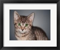 Framed Boundless Cuteness 8