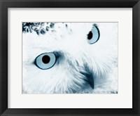 Framed Winter Stare