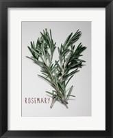 Framed Time-Honored Rosemary 1
