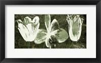 Framed Floral Trio