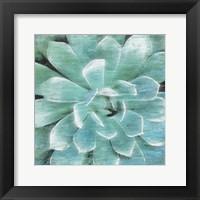Framed Succulent Memory 1