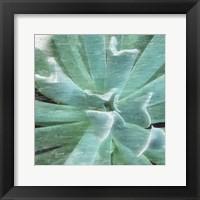 Framed Succulent Memory 2