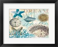 Framed Dream Shells R1