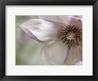 Framed Pink Magnolia 2