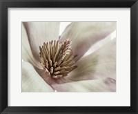 Framed Pink Magnolia 3