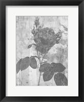 Framed Black Rose In My Garden