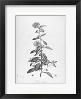 Framed Botanical Eclipse 3