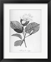 Framed Botanical Eclipse 4