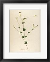 Framed Vintage Botanical 178