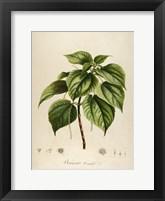 Framed Vintage Botanical 198
