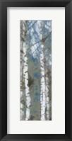 Framed Birch Scape 1