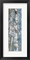 Framed Birch Scape 2