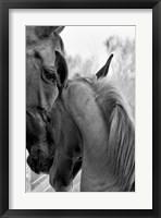 Framed Cheers n' Foal