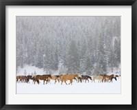 Framed Montana Horses