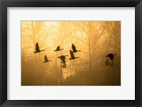 Framed Geese in the Mist