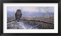 Framed Autumn Mist - Barred Owl