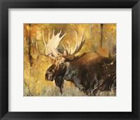 Framed Autumn Moose Study #1