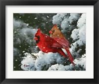 Framed Winter Harmony