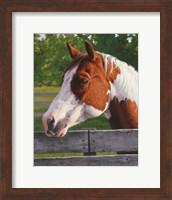 Framed Shotzie - Horse Portrait