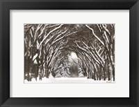 Framed Snow Tree Tunnel