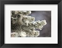 Framed Winter Pine