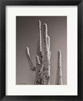 Framed Black & White Cactus