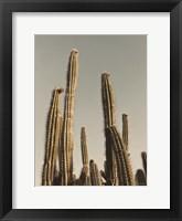 Framed Desert Cacti