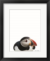 Framed Artic Puffin