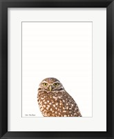 Framed Young Owl