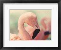 Framed Pink Flamingo