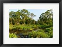 Framed Lango Bai Odzala-Kokoua National Park Congo