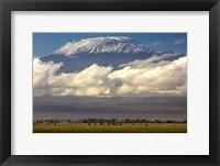 Framed Amboseli National Park, Kenya