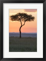 Framed Sunset over Tree, Masai Mara National Reserve, Kenya