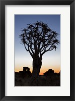 Framed Quiver Tree Forest, Kokerboom at Sunset, Keetmanshoop, Namibia