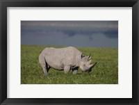 Framed Black Rhinoceros at Ngorongoro Crater, Tanzania