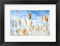 Framed Wheat Blowing in the Wind