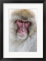 Framed Portrait of a Monkey, Japan