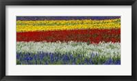 Framed Colorful Flowers, Furano, Hokkaido, Japan